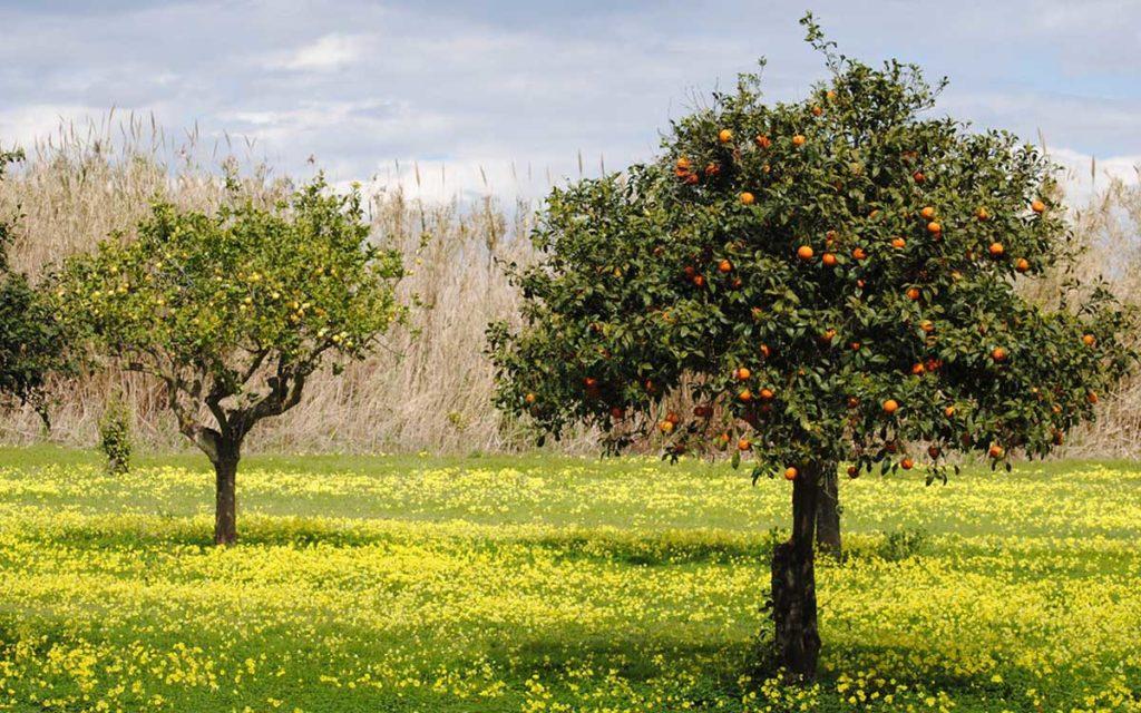 Il Governo Draghi scippa 2 miliardi all'agricoltura del Sud